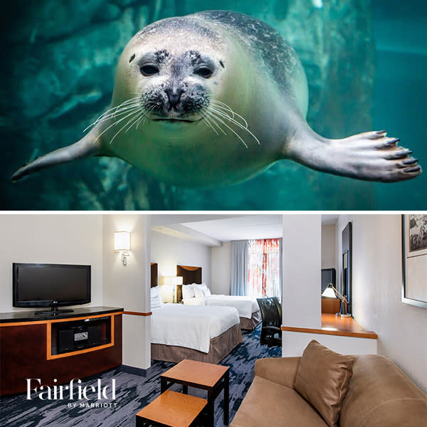 Fairfield Inn and Suites plus Journey to Churchill package
