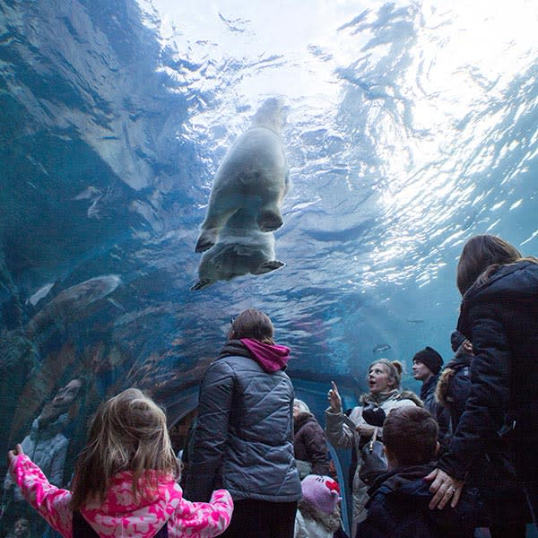 Assiniboine Park Zoo Admission and Meal Package