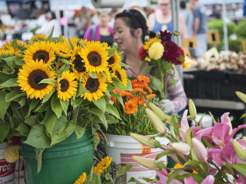 Des Moines Farmers Market Flower Vendor Sunflowers