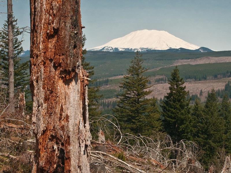 Bells Mountain Trail Viewpoint