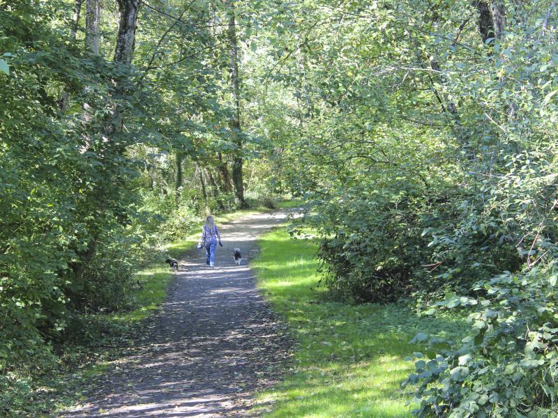 cougar creek trail