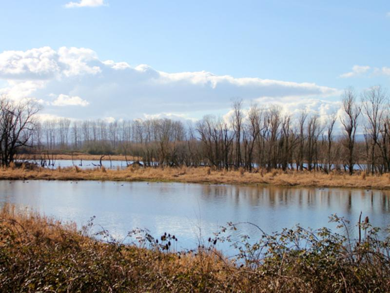 Ridgefield Wildlife Refuge