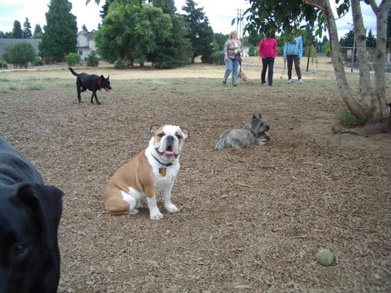 ross dog park