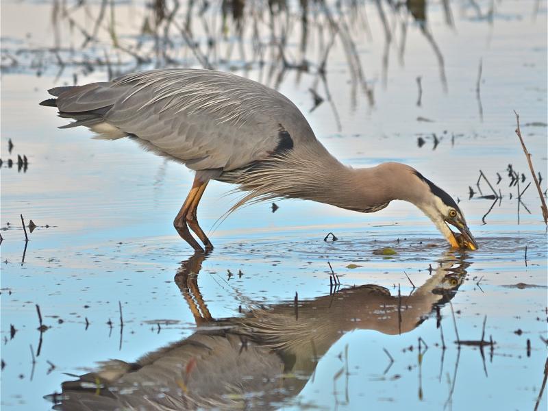 ridgefield refuge bird