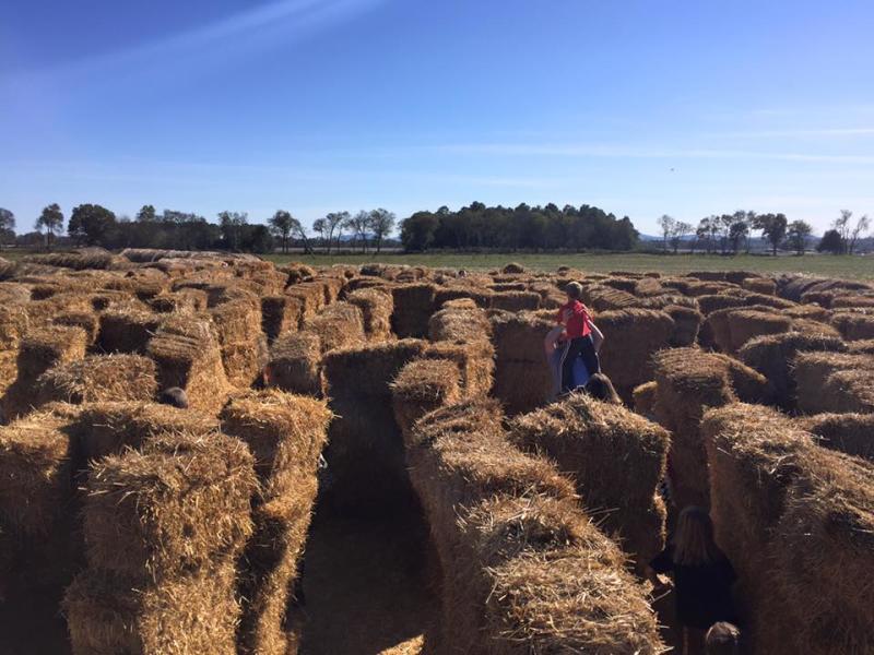 Tate Farm Hay Maze