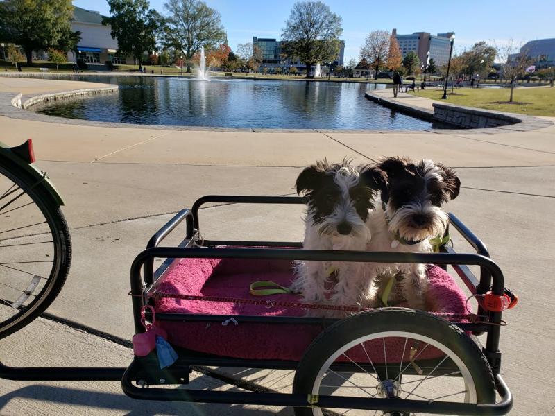 Huntsville Pups in Bike