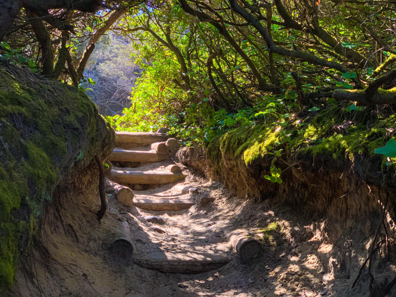 Hobbit Beach trail by Melanie Griffin