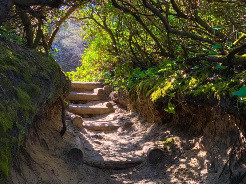 Hobbit Beach trail by Melanie Griffin