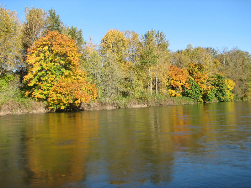 Fall foliage on Willamette River by Cari Garrigus