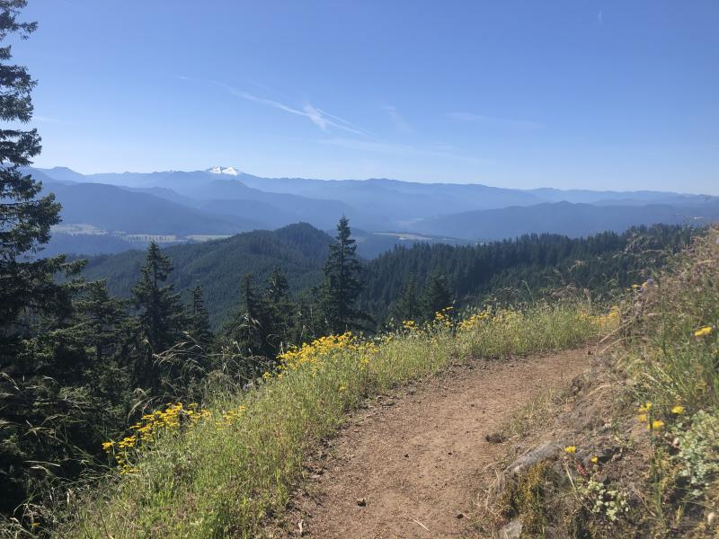 Alpine trail view with wildflowers in the foreground and snow-capped Cascade Mountains in the distance.