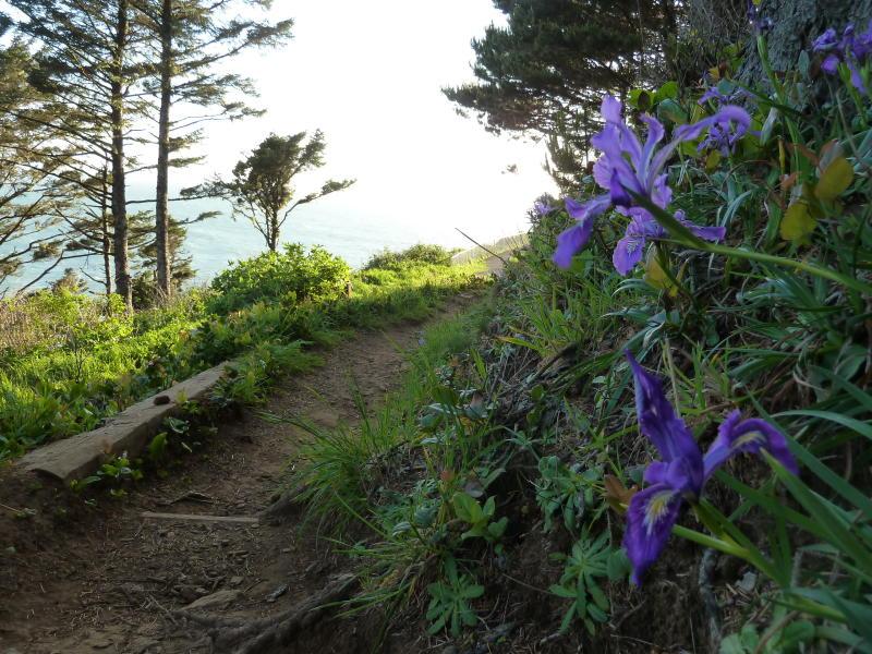 Cape Creek Hike by Jennifer Archer
