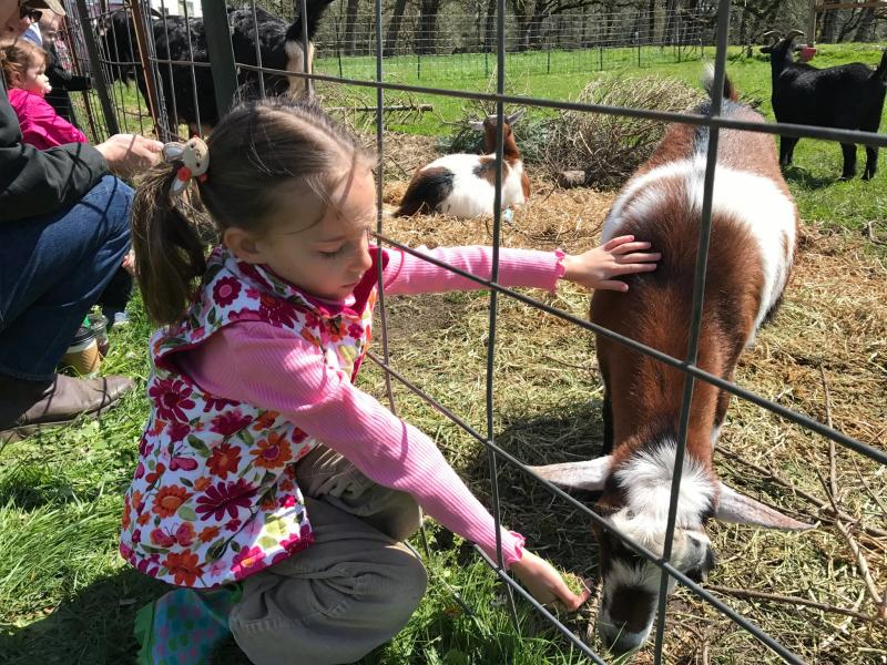 Girl feeding and petting a goat through a fence.