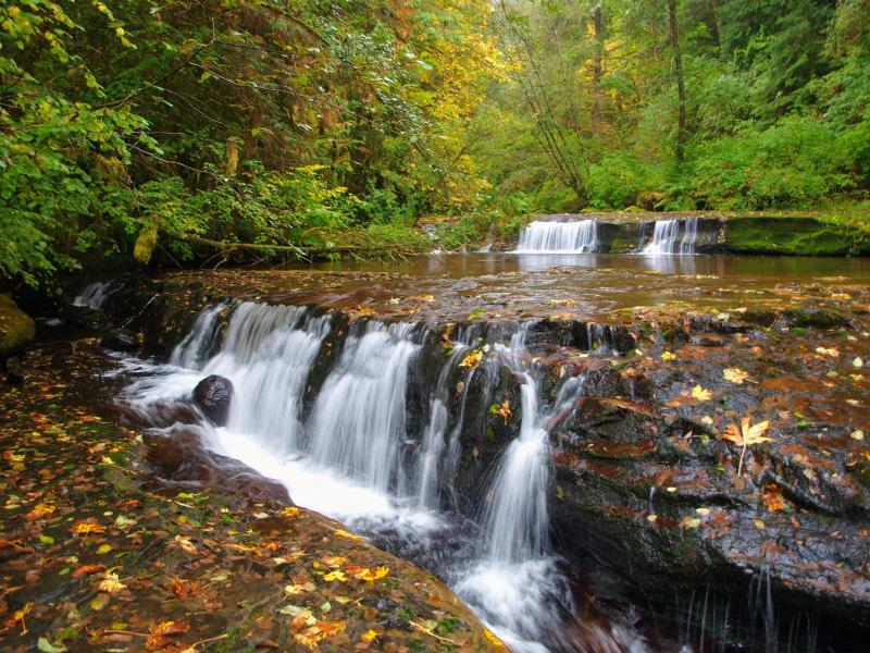 Sweet Creek Falls in Autumn by Adam Sawyer