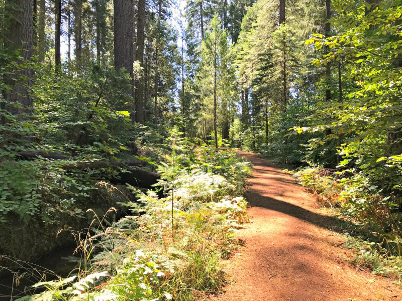 Harris Tree Farm Nature Trail