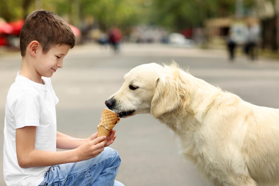 Dog eating ice cream with owner