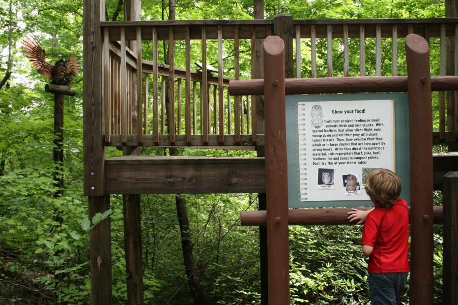 Woodland Trail Kid's Adventure