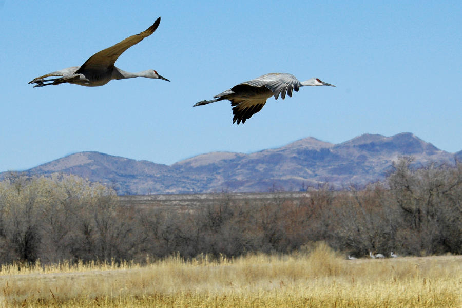 Birds of the Bosque 2