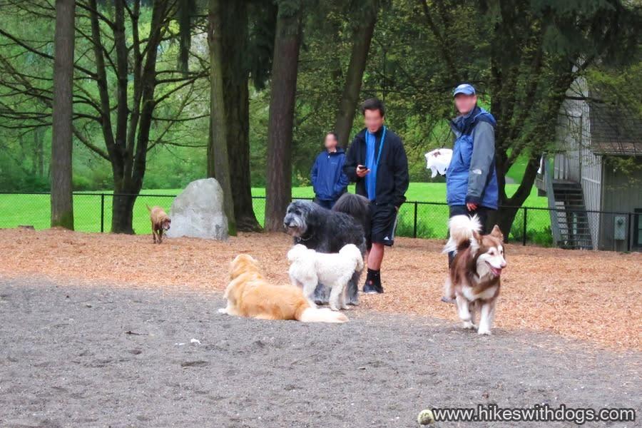 Robinswood Dog Park