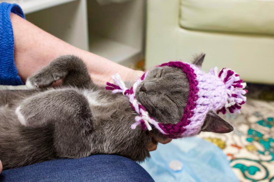 Cat Wearing a Beanie a Sleep on Women's Lap at CattyShack
