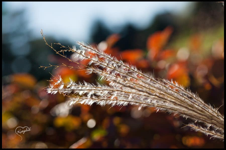 Closeup of weeds