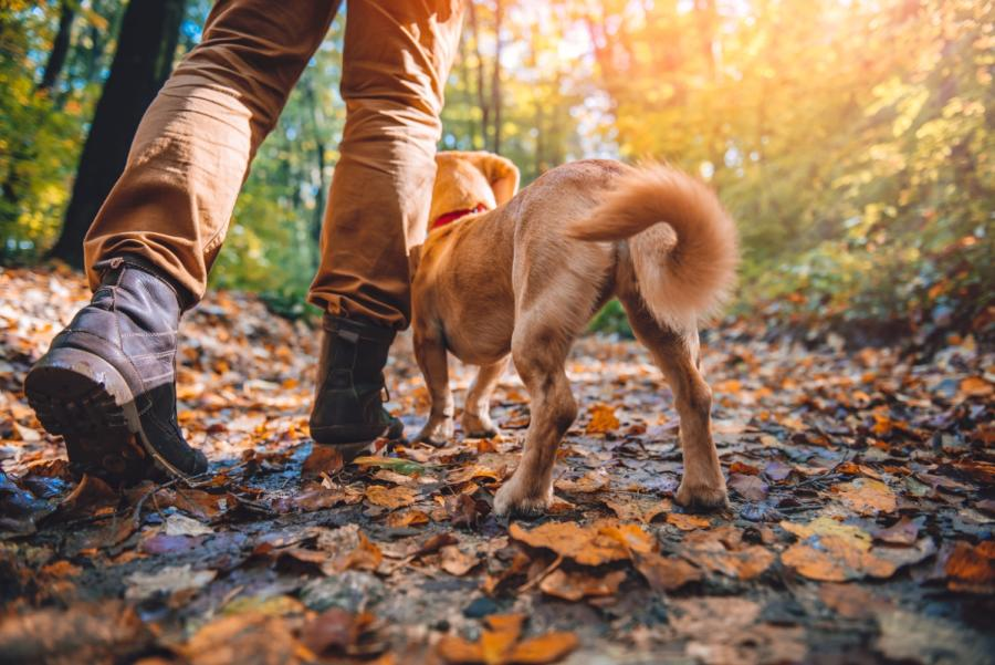 Dog walking on trail with owner