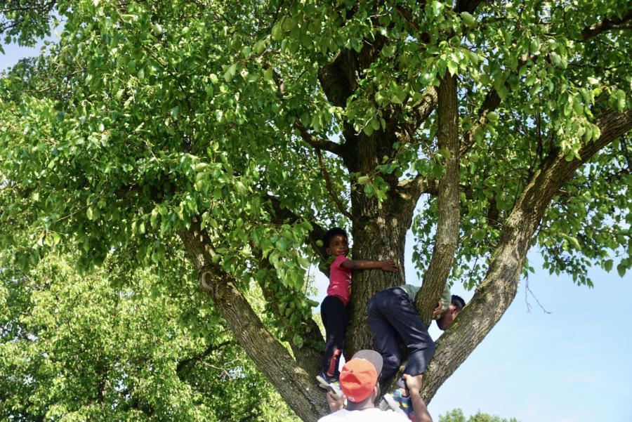Zenovia Park Tree