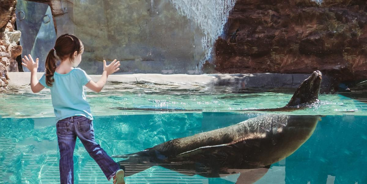 Girl with sea lion at Fort Wayne Children's Zoo