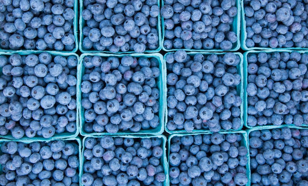 Victor Farmers Market - Blueberries