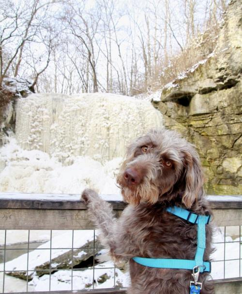 Dog in front of Hayden Run Falls
