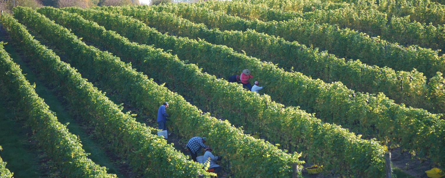 verterra_winery.jpg
