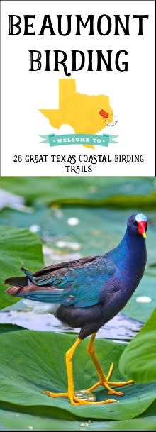 Texas Coastal Birding Trails