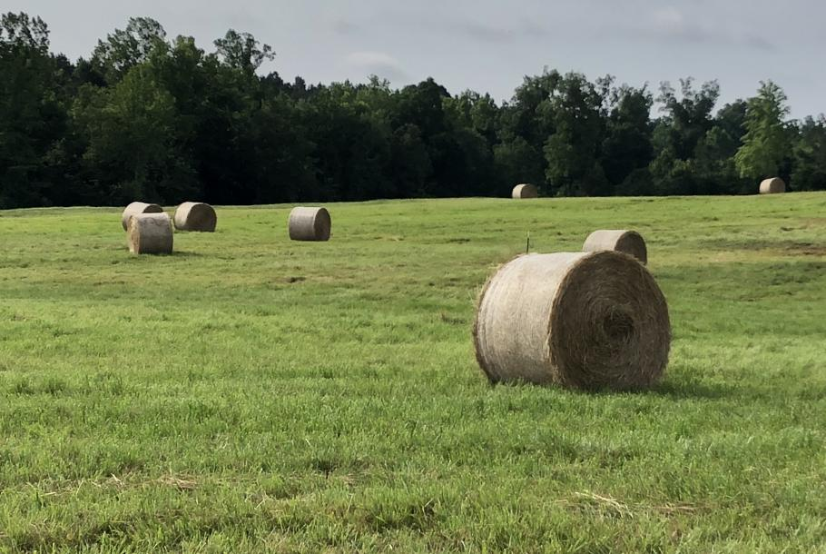 MeadowView - Hay Harvest