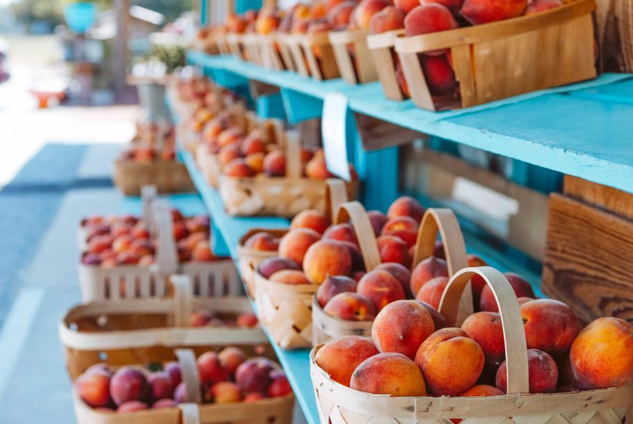 Peach Tree Orchard Peaches