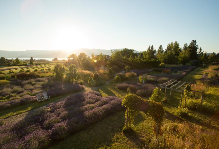 Lavender & Herb Farm