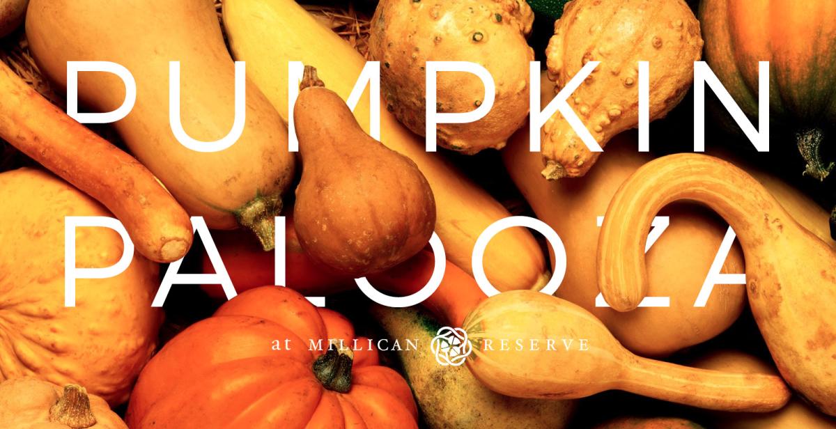 Pumpkin Palooza at Millican Reserve