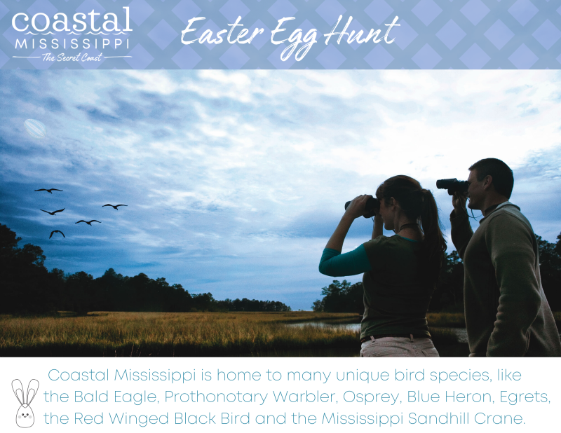Easter Egg Hunt - birding