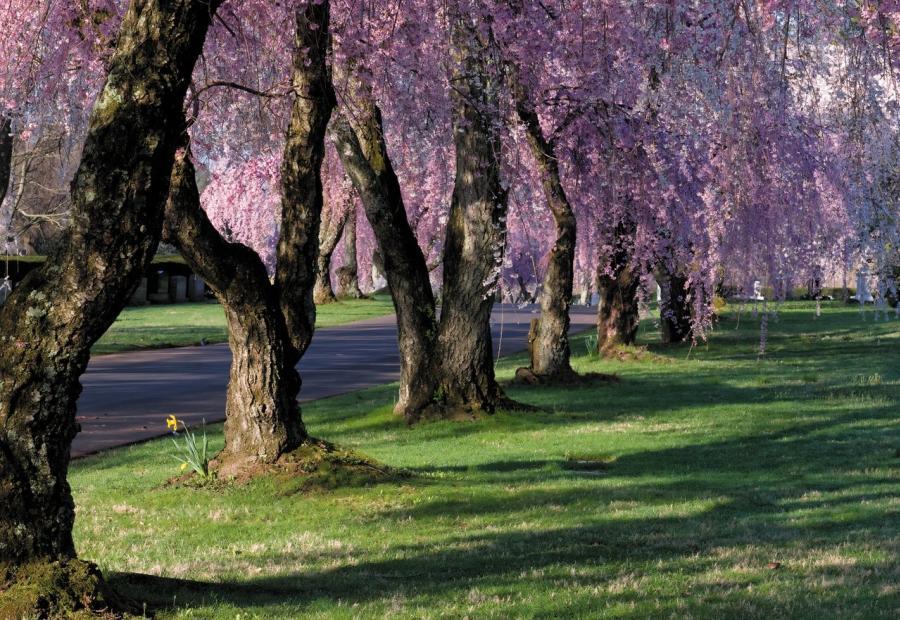 Lexington-Cemetery-medium