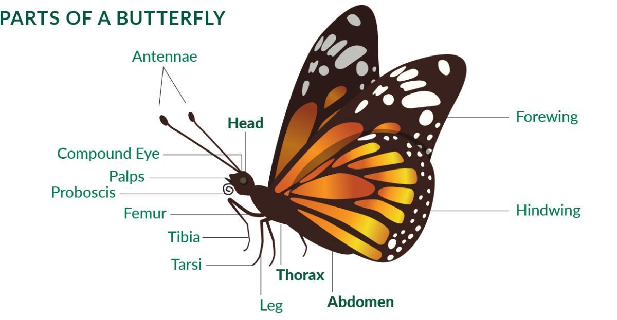 Activities - Butterfly Wonderland