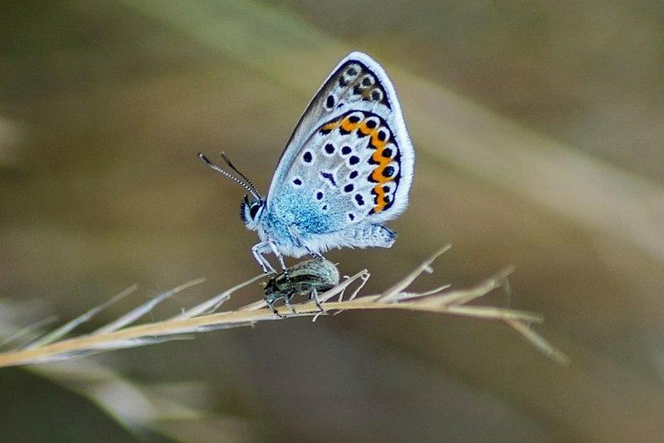 ABQ Butterflies 6
