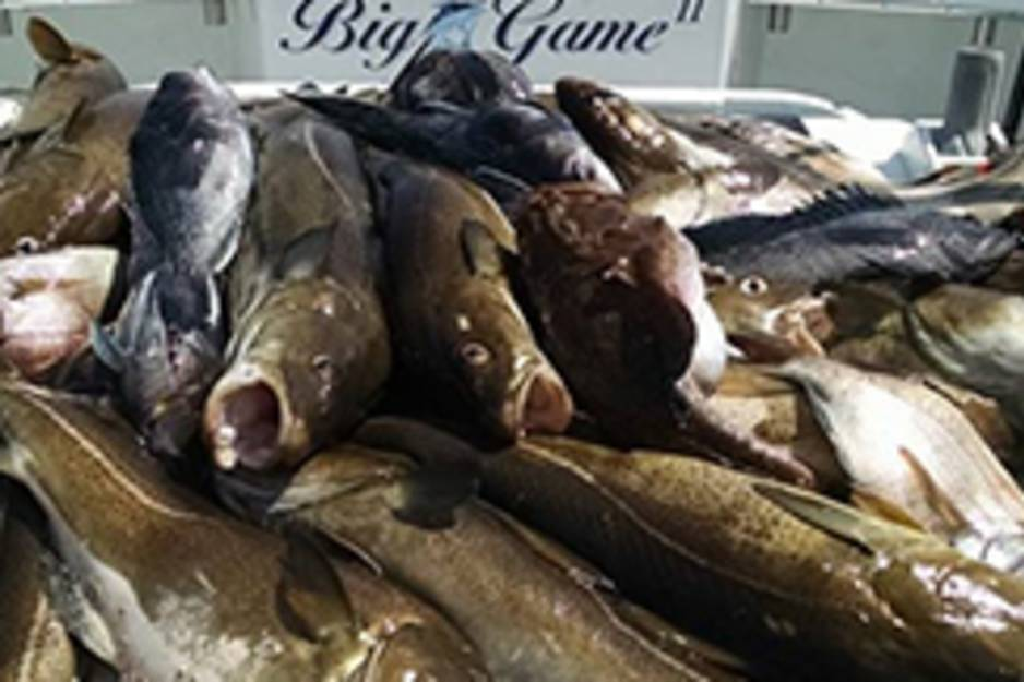 big gam sport fishing.jpg