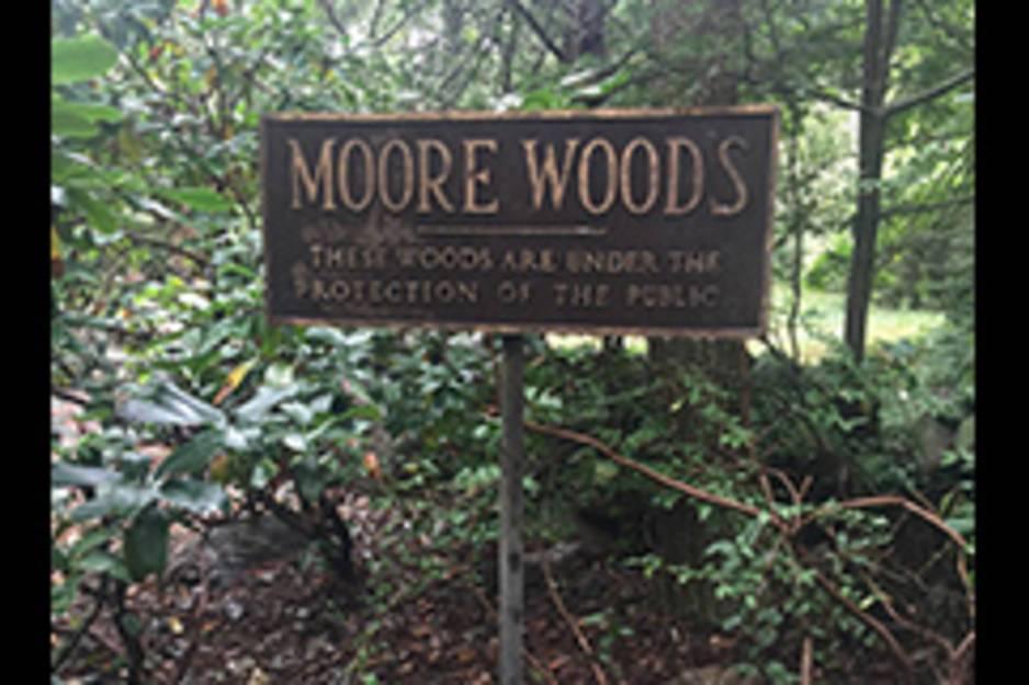 moore woods.jpg