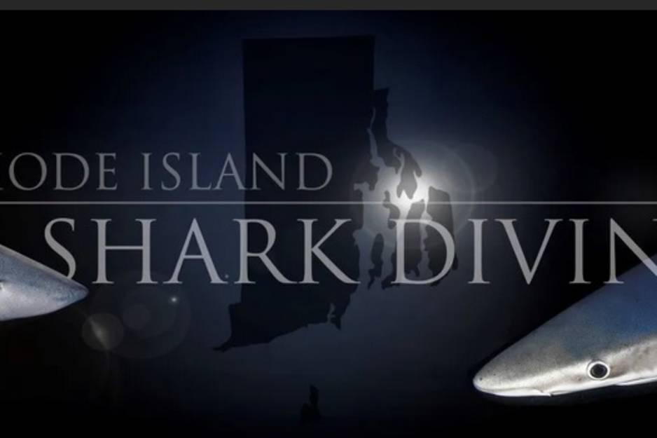 ri shark diving