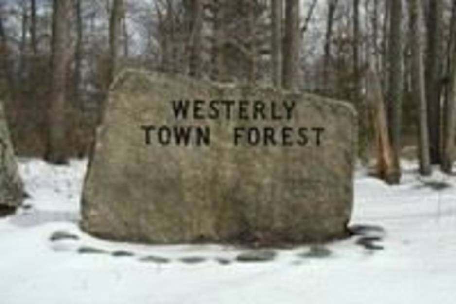 westerly town forest