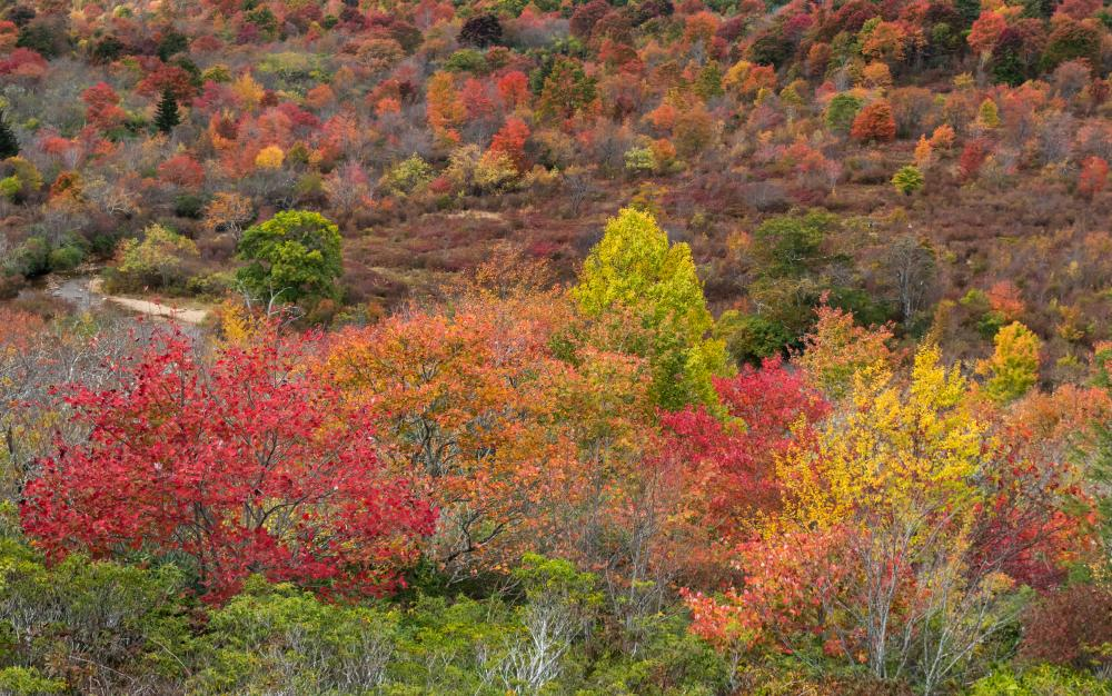 Peak fall color at Graveyard Fields hiking area on the Blue Ridge Parkway near Asheville, NC