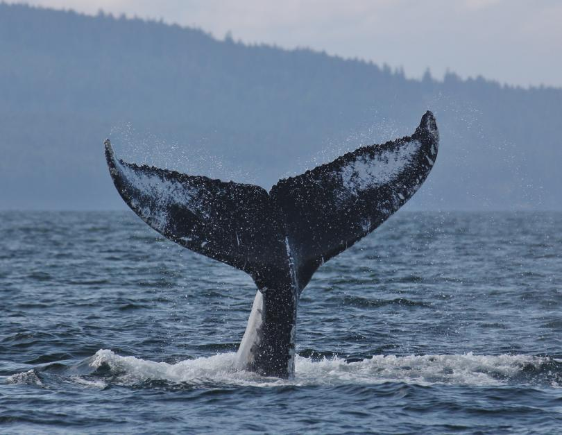 Vancouver Whale Watch