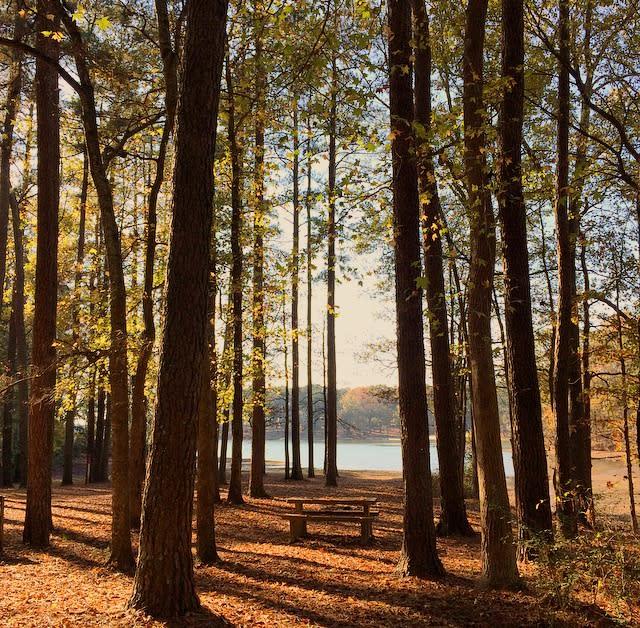 Joe Wheeler State Park Picnic Table in Trees
