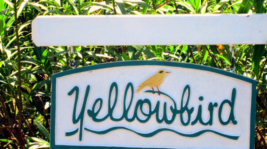 Yellowbird at Tryall