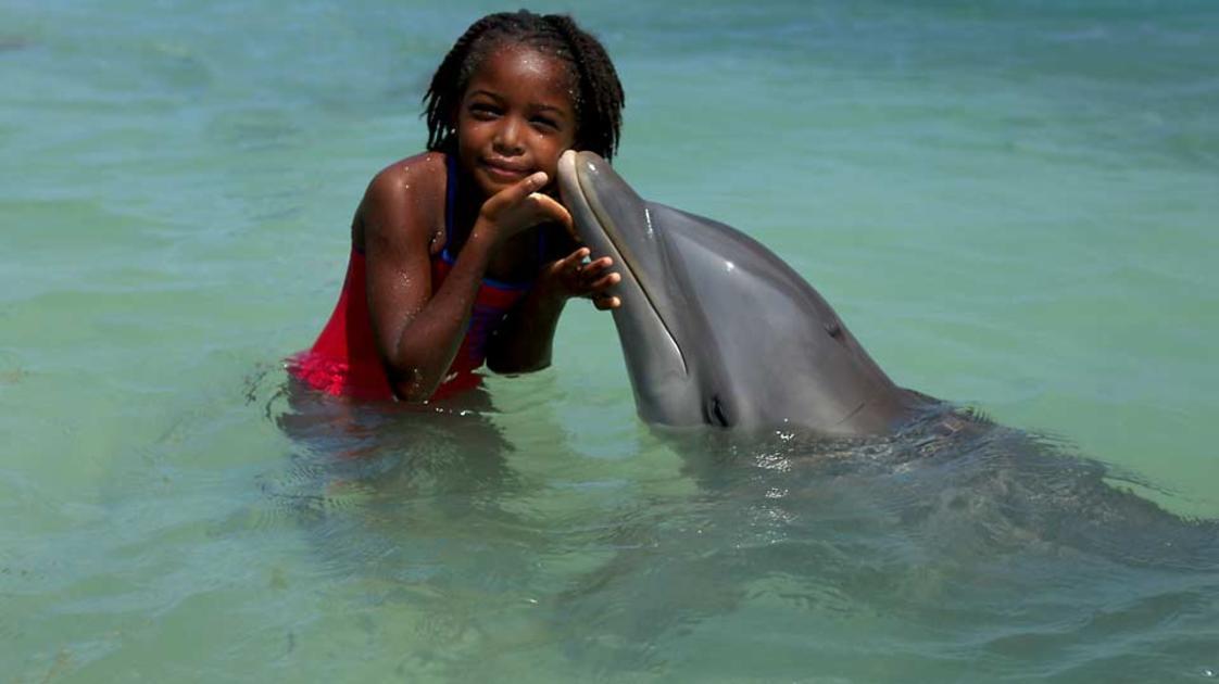 Half-Moon,-A-RockResort,-Rose-Hall,-Jamaica---Dolphin-Kiss