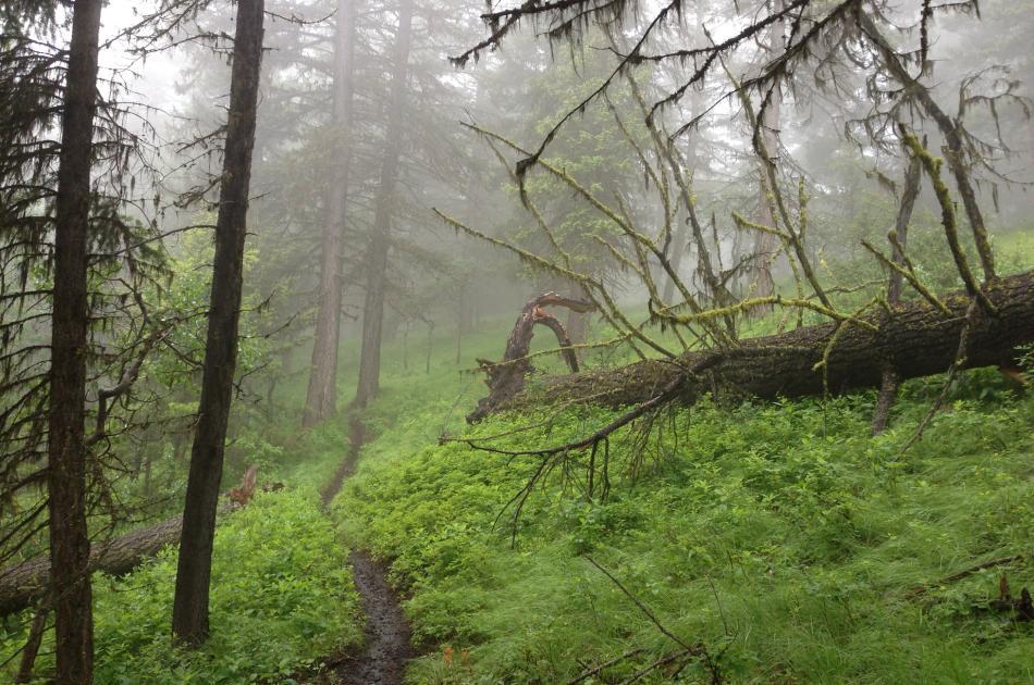 McDougall Rim Trail