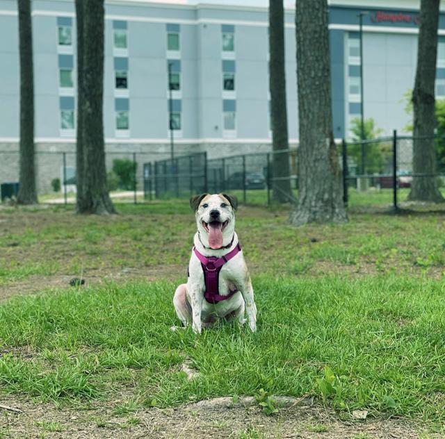 Benson Dog Park (2) 2000x1500 72dpi